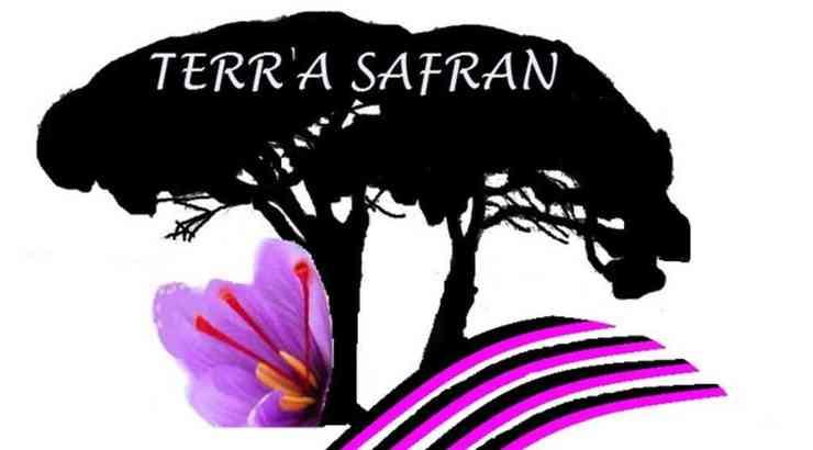 La safranière de Nérigean